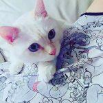 にゃん🐱恋活 ~保護猫と触れ合いながら恋活❤️~